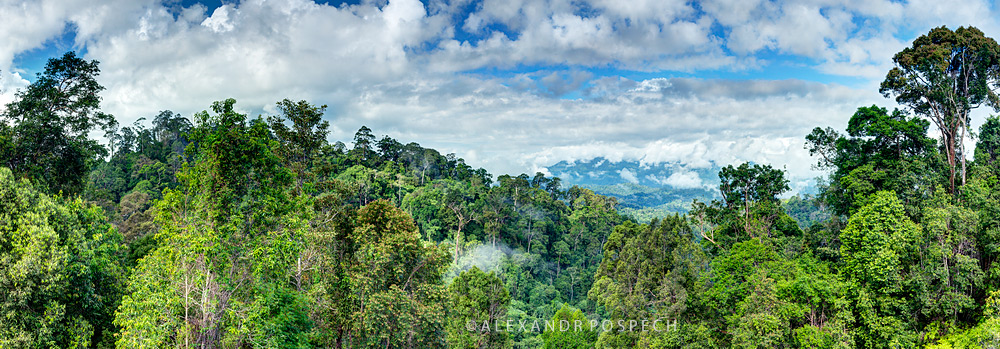 -Central-Borneo-Indonesia-Panorama-primary-rainforest